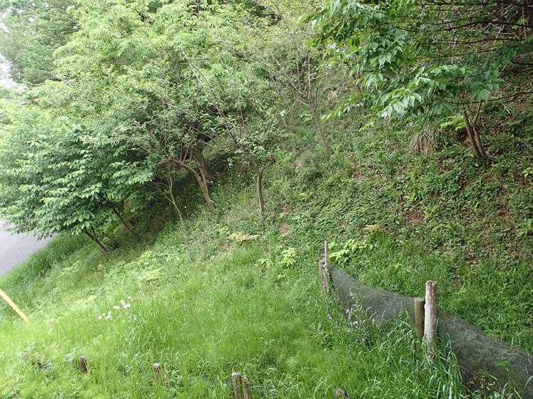 神明第二緑地200503
